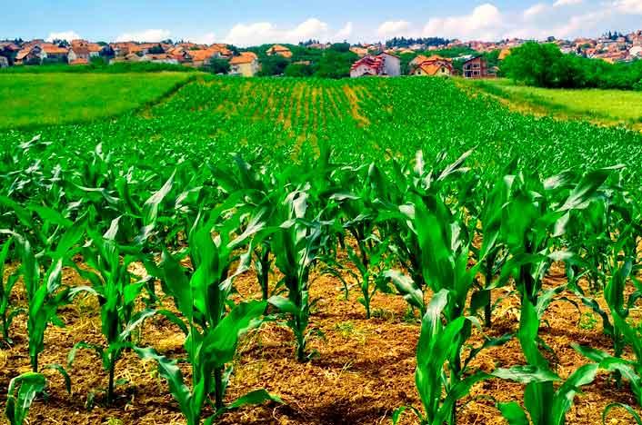 qué es la agricultura ecológica