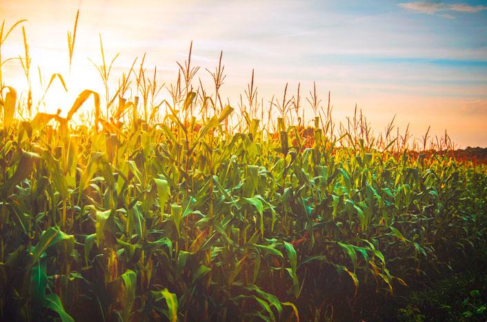 cultivos de agricultura ecológica
