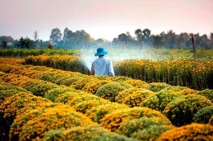 persona regando cultivos con agua