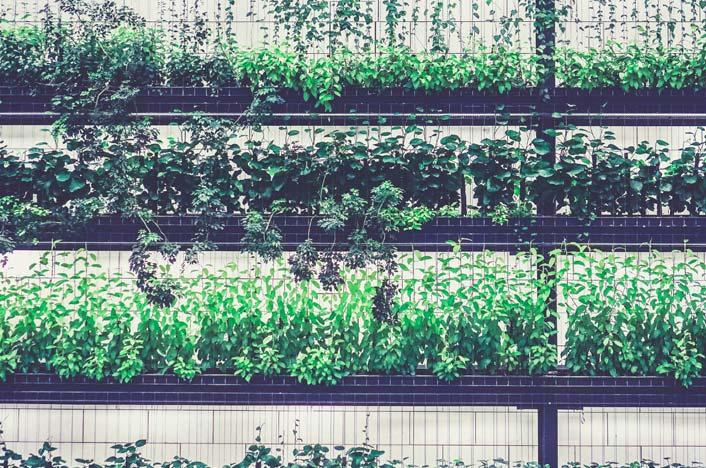 Invernadero con distintos tipos de plantas
