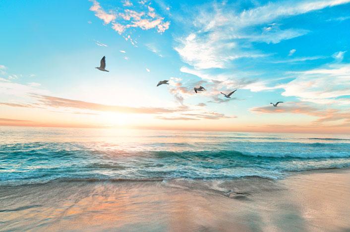 Playa con pájaros volando