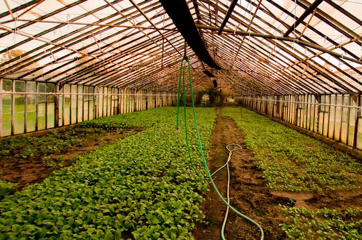 cultivo de semillas