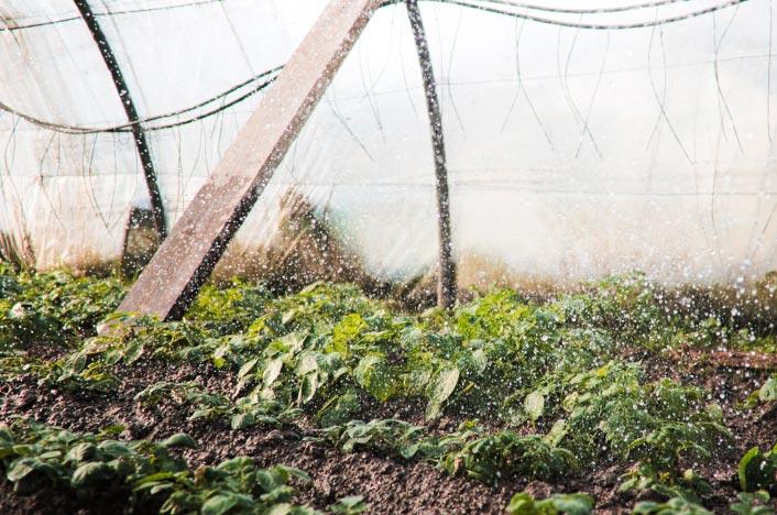 Riego por goteo en cultivo
