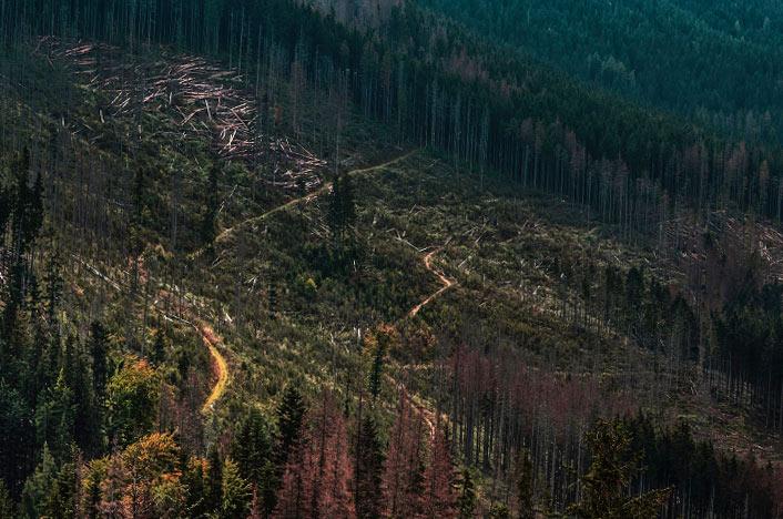 Tala de árboles en la montaña