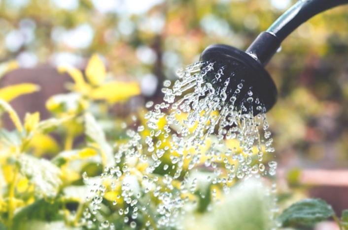 importancia de cuidar el agua en el jardín