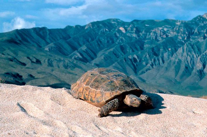 tortuga en el desierto blanco de cuatrociengas