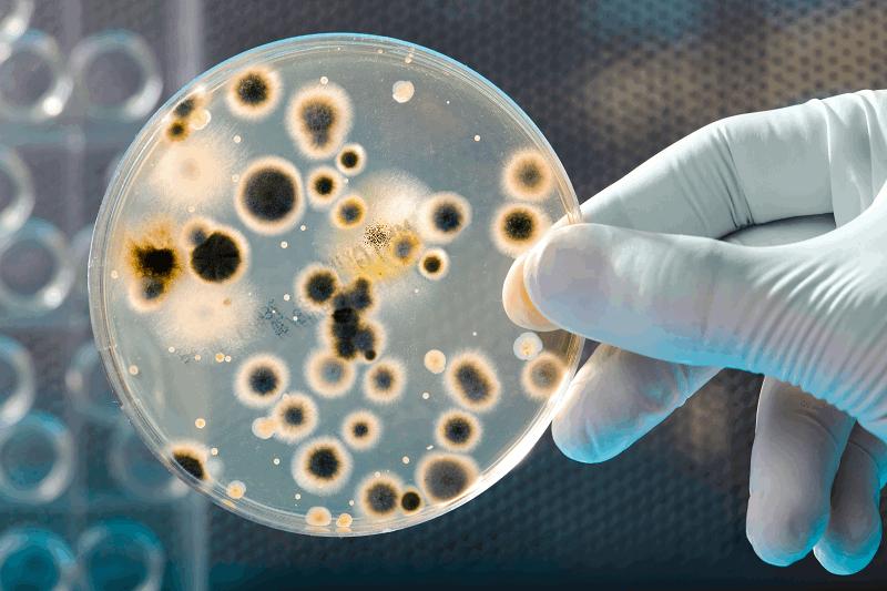 Bacterias para gasolina con naranjas