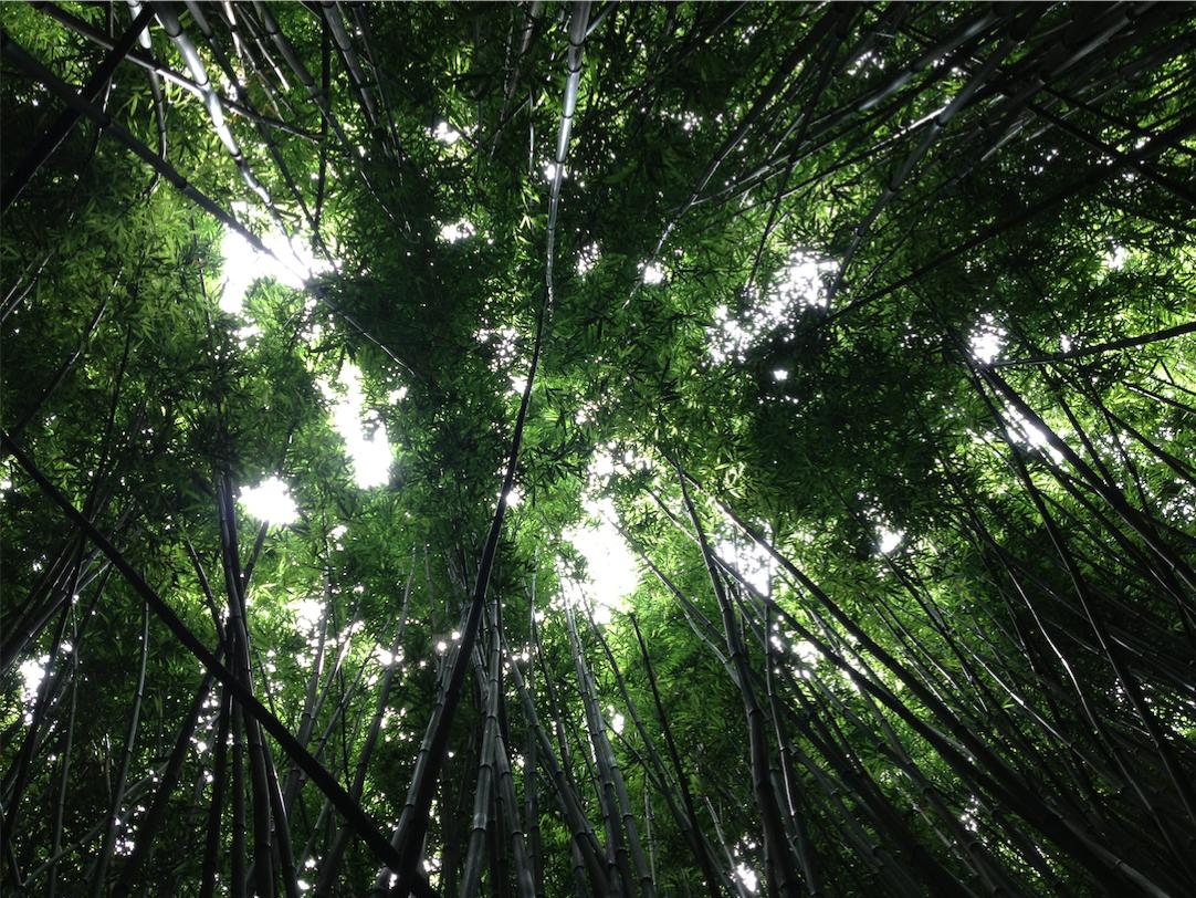 Carbono en los bosques colombianos