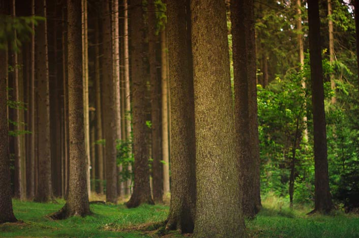 Ecosistema terrestre de bosque