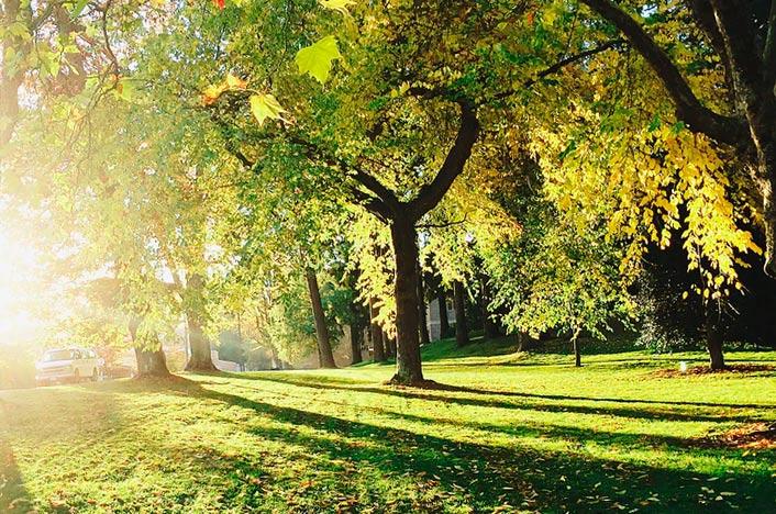 La importancia de las áreas verdes