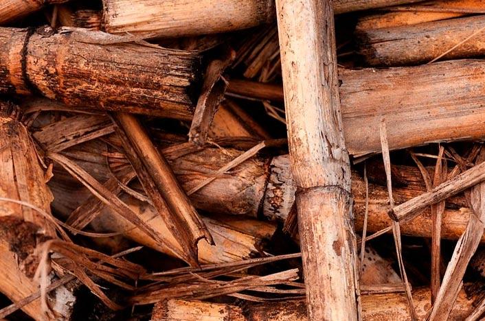 Biomasa de cultivos con ventajas