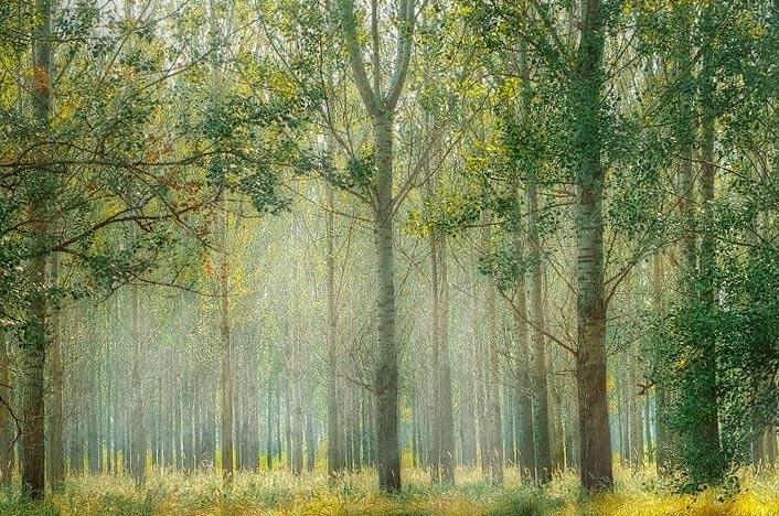 Ecología del paisaje