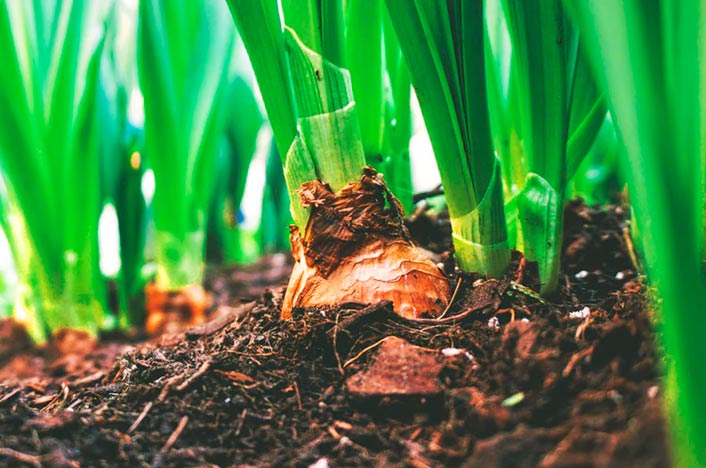 Comportaje para plantas para reciclar basura orgánica