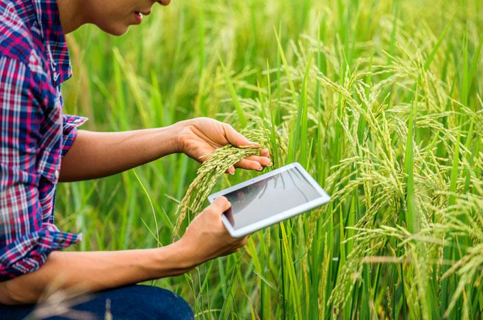 Agricultor viendo calendario de siembra en tablet