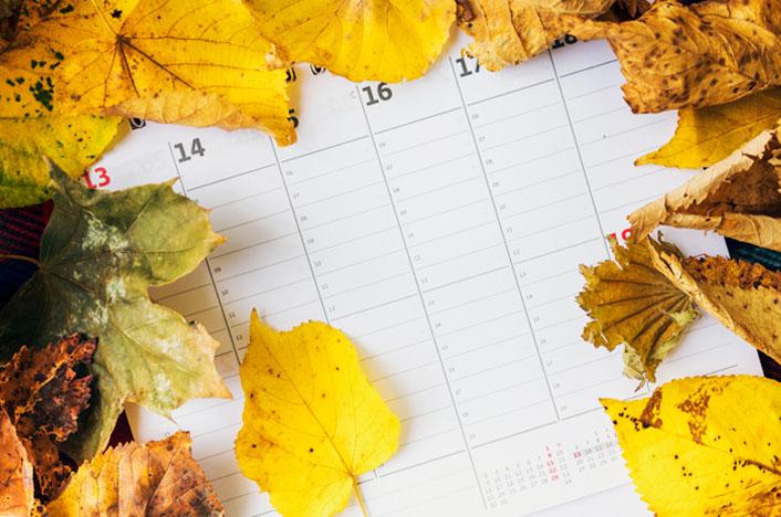 Calendario de siembra: qué plantar dependiendo del mes