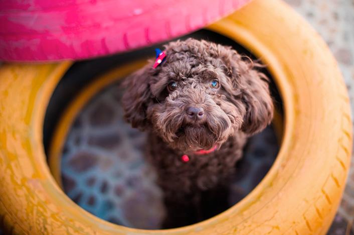 perro dentro de neumático