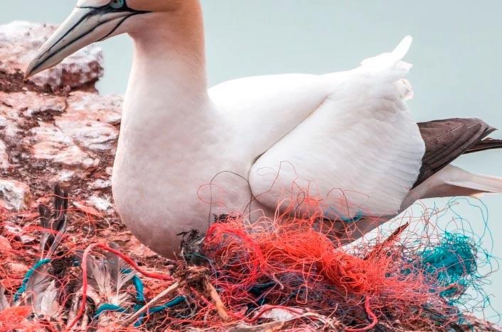 Ave rodeada de plástico en el mar