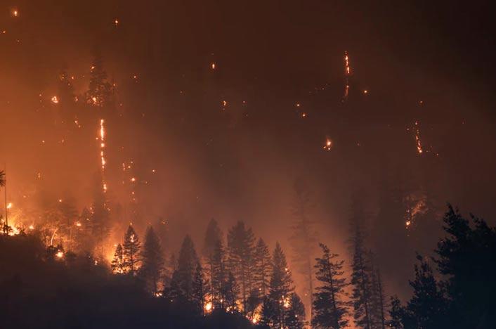 Incendio forestal y árboles