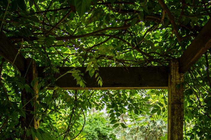 Jardín verde en el techo
