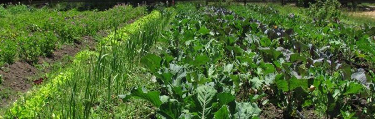 Tienda alternativa de productos vegetales en California
