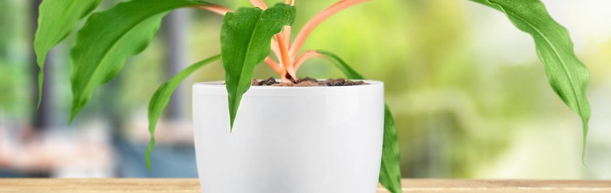 Autorriego para las plantas
