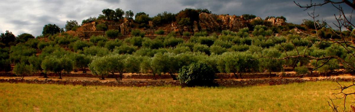 Emisiones agricultura
