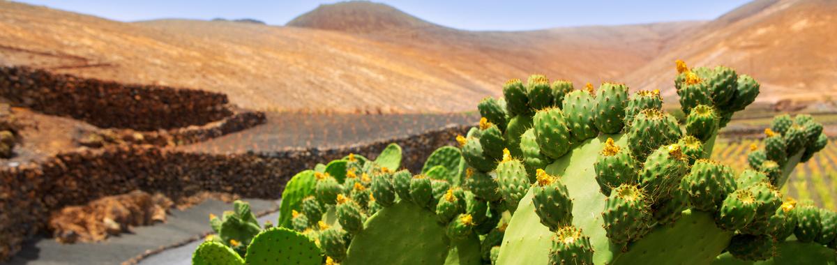 El nopal como protector solar ecológico