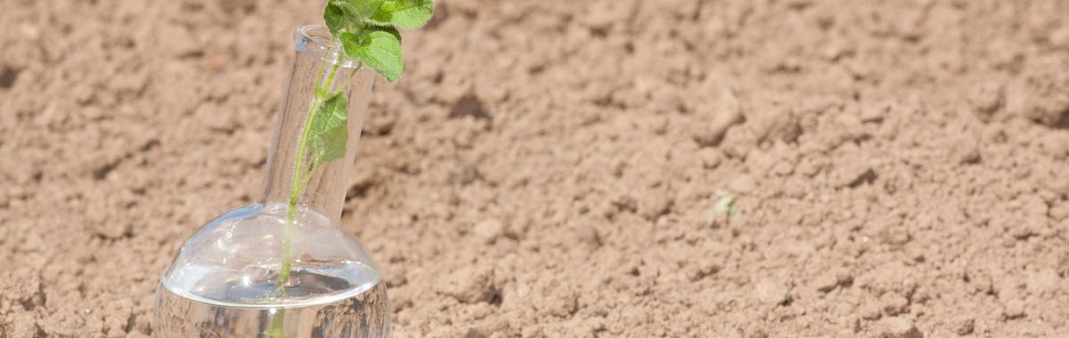 El Gobierno planta cara a la  desertificación en Argentina