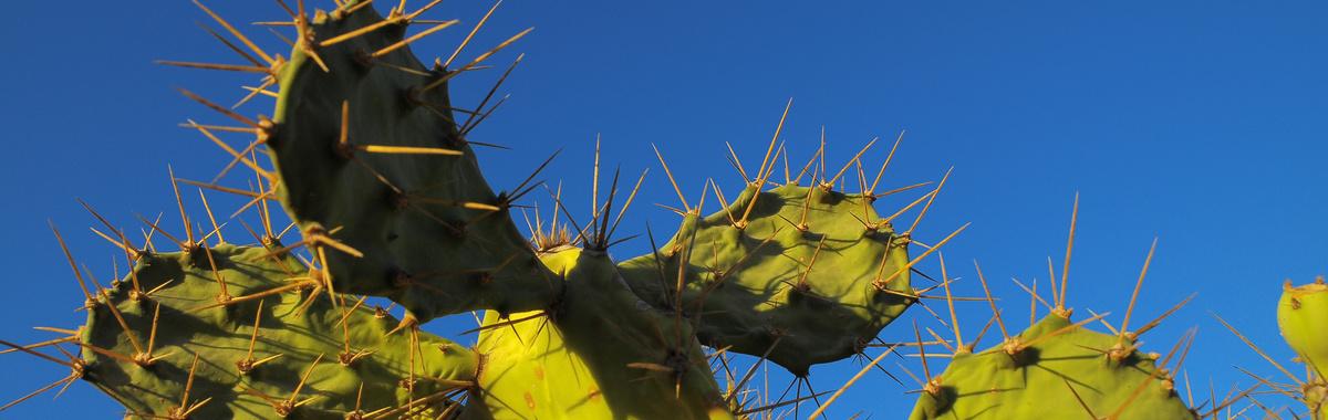 Biomasa a partir del nopal (chumbera) en México