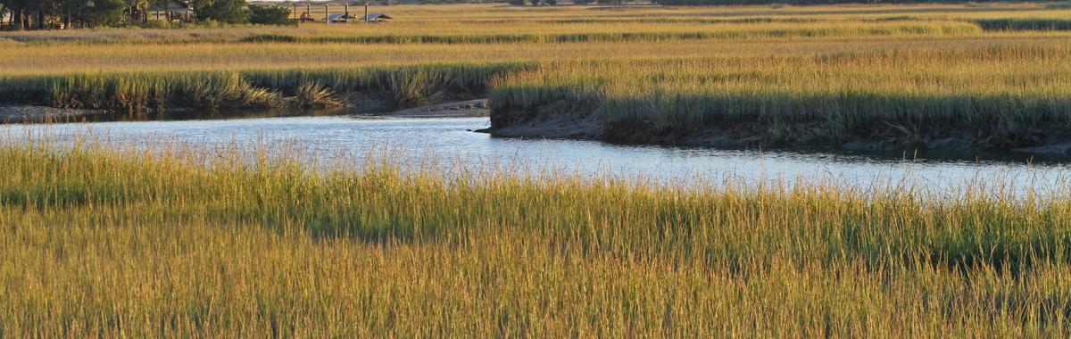 La importancia de proteger los biomas acuáticos