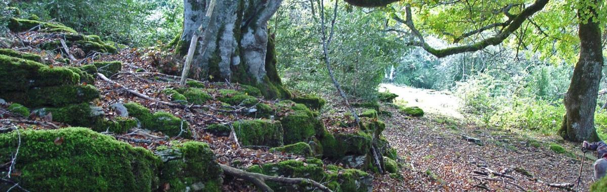 árbol en un bosque