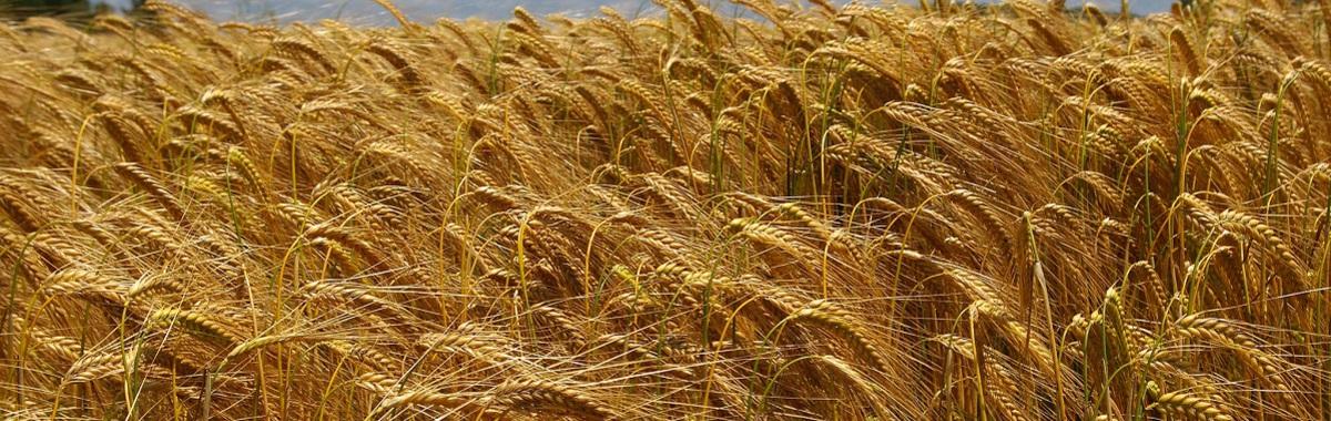 producción de biocarburantes