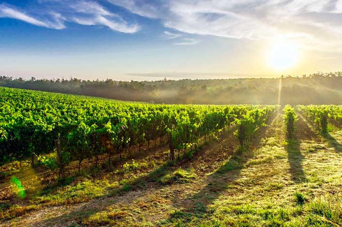 qué es la agricultura biodinámica