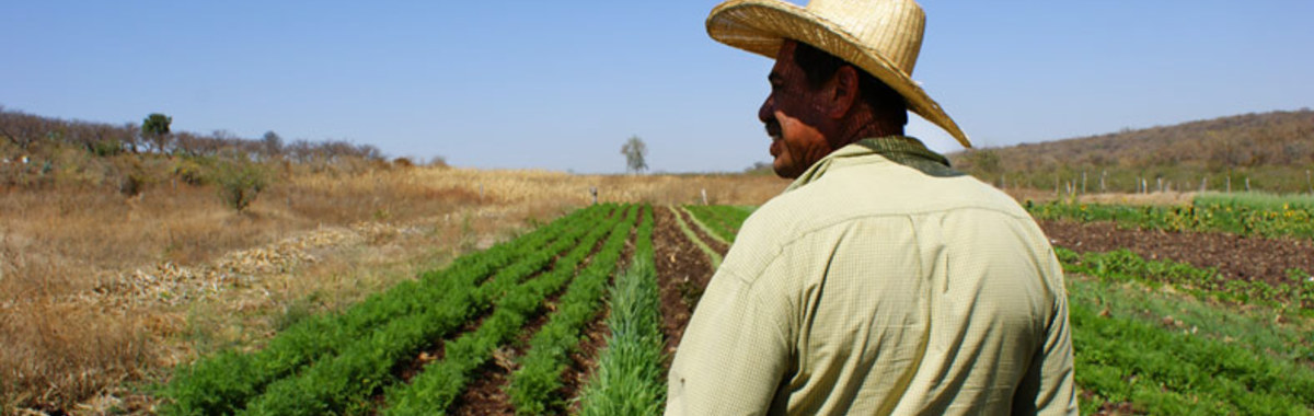 Agricultura ecológica en Jalisco