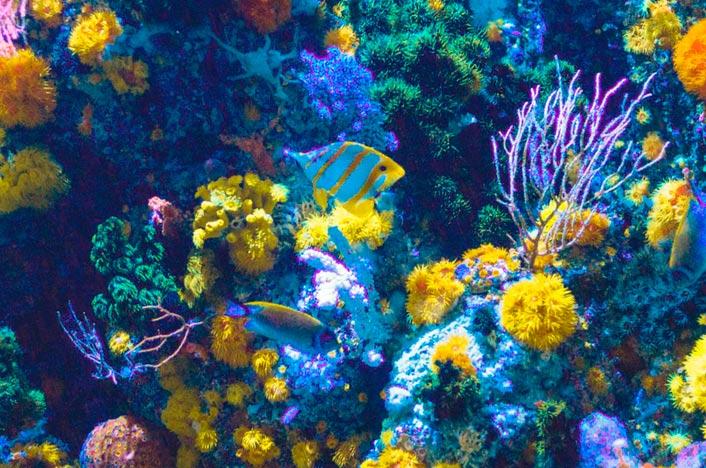 Arrecife de coral y peces
