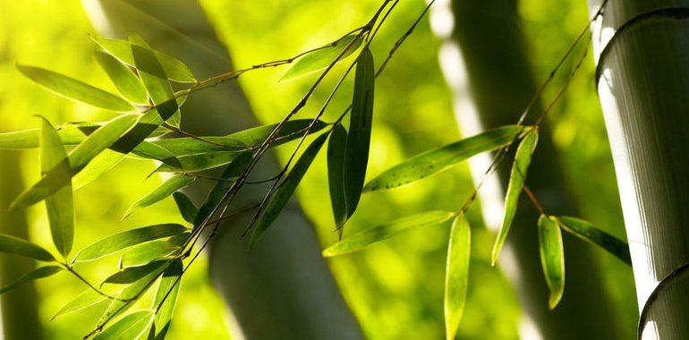Bebamboo: ecodiseño en bambú con firma mexicana