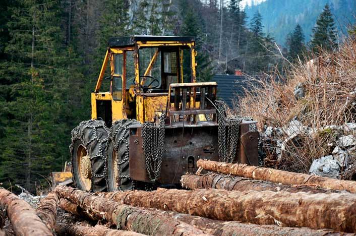 Deforestación o tala de árboles