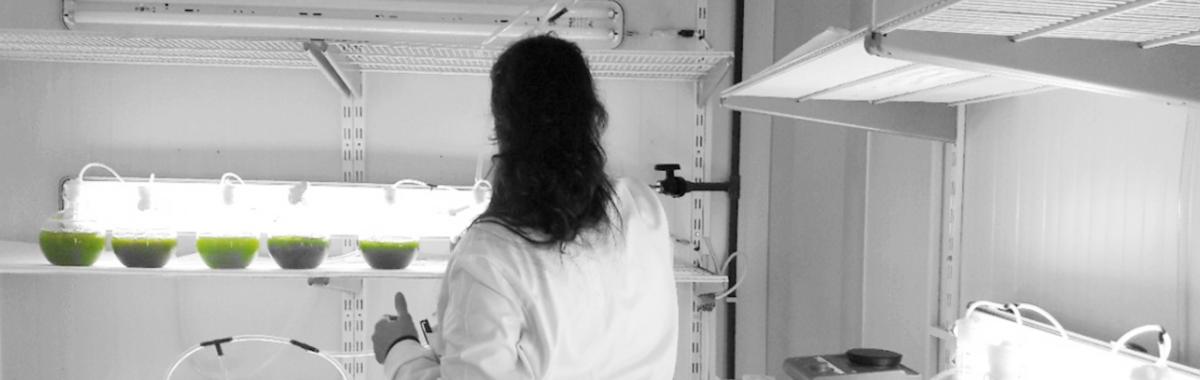 Endesa y su apuesta por el cultivo de Microalgas