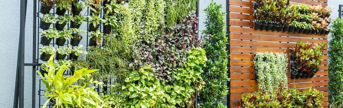 Construye tu propio jardín vertical en 5 sencillos pasos
