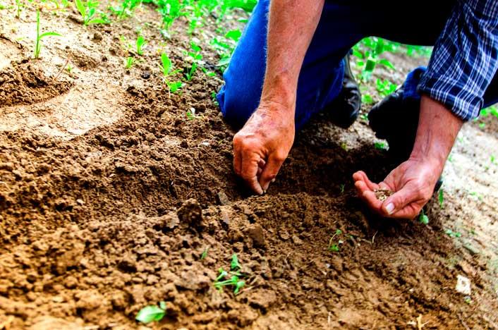 tierra de suelo cultivado