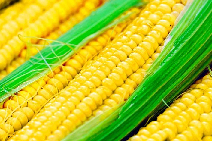 usos de los biocarburantes