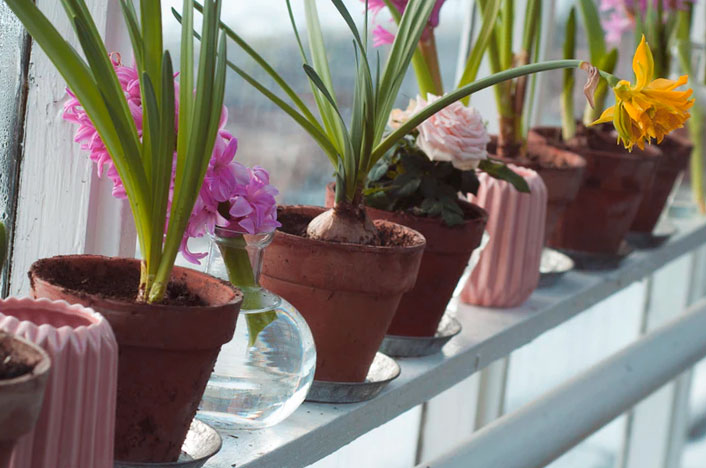 Reutilizar el agua en casa con las macetas