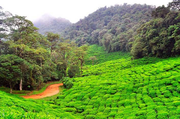 reducir la deforestación en Colombia