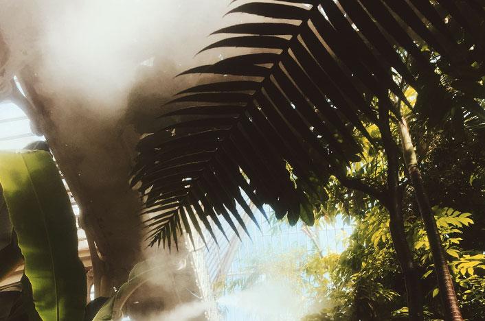 Presencia de humedad en el huerto