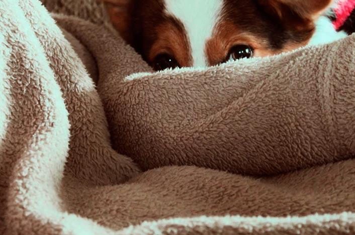 Manta eléctrica y perro