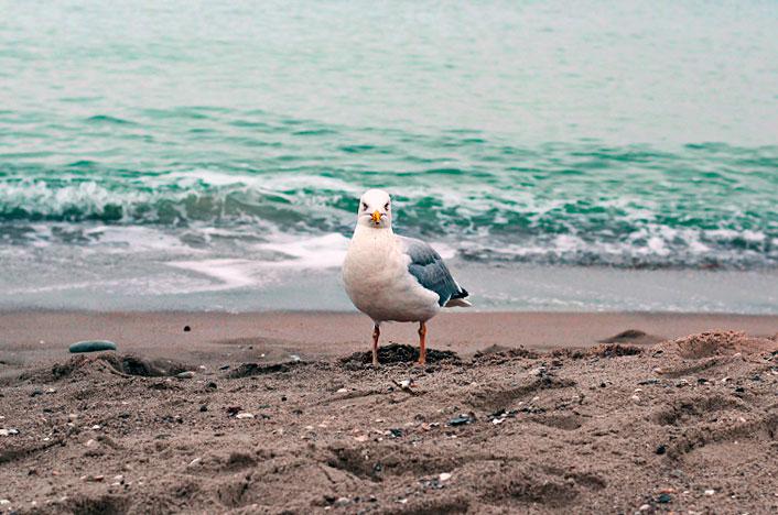 gaviota en playa limpia