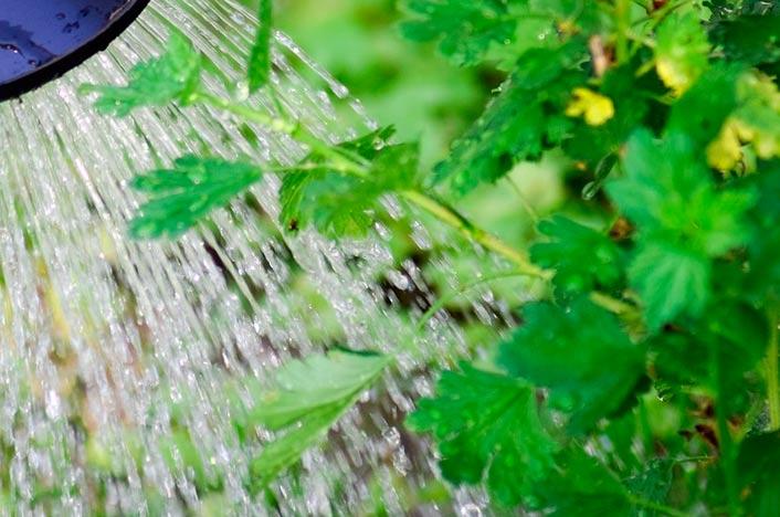 Sistema de riego por goteo casero y planta