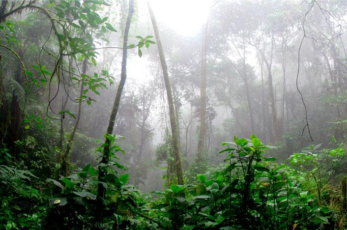 Causas de la lluvia ácida: ¿qué la origina?