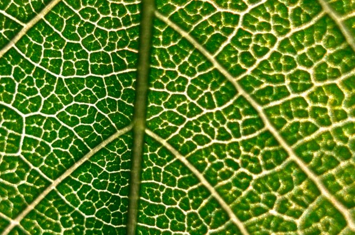 Fotosíntesis planta