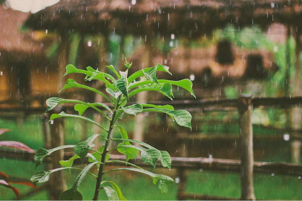 Luvia ácida sobre la vegetación